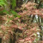 3/17/2012 March Arboretum (101)