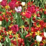 3/17/2012 March Arboretum (103)