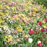 3/17/2012 March Arboretum (104)