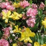 3/17/2012 March Arboretum (105)