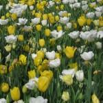 3/17/2012 March Arboretum (106)