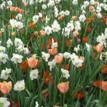 3/17/2012 March Arboretum (109)