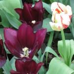 3/17/2012 March Arboretum (111)