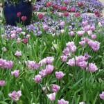 3/17/2012 March Arboretum (115)