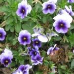 3/17/2012 March Arboretum (12)