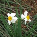 3/17/2012 March Arboretum (128)
