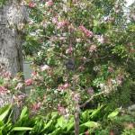 3/17/2012 March Arboretum (130)
