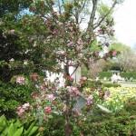 3/17/2012 March Arboretum (131)