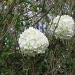 3/17/2012 March Arboretum (132)