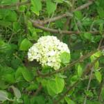 3/17/2012 March Arboretum (133)