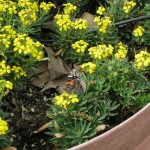 3/17/2012 March Arboretum (150)