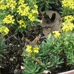 3/17/2012 March Arboretum (151)