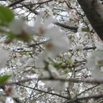 3/17/2012 March Arboretum (154)