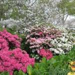 3/17/2012 March Arboretum (169)
