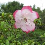 3/17/2012 March Arboretum (171)