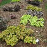 3/17/2012 March Arboretum (18)