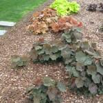 3/17/2012 March Arboretum (19)