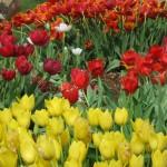3/17/2012 March Arboretum (22)