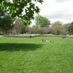 3/17/2012 March Arboretum (32)
