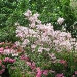 3/17/2012 March Arboretum (36)