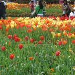 3/17/2012 March Arboretum (37)