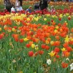 3/17/2012 March Arboretum (38)