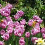 3/17/2012 March Arboretum (43)