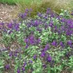 3/17/2012 March Arboretum (58)