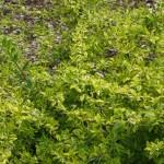3/17/2012 March Arboretum (68)