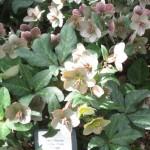 3/17/2012 March Arboretum (69)