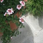 3/17/2012 March Arboretum (78)