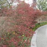 3/17/2012 March Arboretum (81)