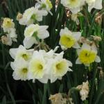 3/17/2012 March Arboretum (86)