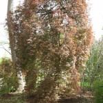 3/17/2012 March Arboretum (90)