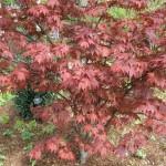 3/17/2012 March Arboretum (94)