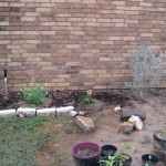3/17/2012 March Flower Beds (19)