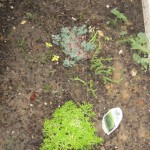 3/17/2012 March Flower Beds (22)