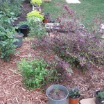 3/17/2012 March Flower Beds (25)