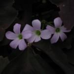 4/29/12 April Blooms (5)