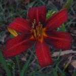 4/30/12 April Buds Blooms (7)