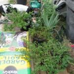 8/11/2012 August Gardening (1)