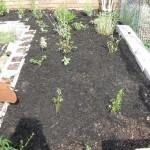8/11/2012 August Gardening (2)