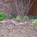 11/30/2012 November Garden Scenes (25)