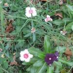 11/30/2012 November Garden Scenes (31)