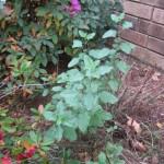 11/30/2012 November Garden Scenes (34)