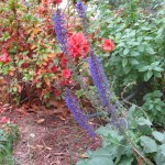 11/30/2012 November Garden Scenes (36)