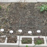 3/4/2013 March Blooms and New Plantings (21)