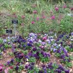 3/17/2013 Dallas Blooms (5)