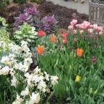 3/17/2013 Dallas Blooms (100)