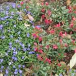 3/17/2013 Dallas Blooms (124)